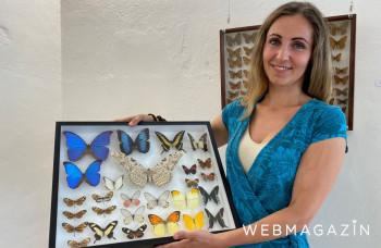 Návštevníci výstavy motýľov vo Veľkom Šariši môžu vidieť ich liahnutie