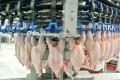 Do Česka sa z Poľska stále dováža hydinové mäso so salmonelózou