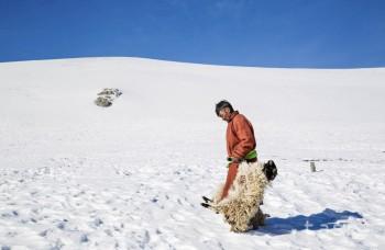 Krutá zima v Mongolsku ohrozuje živobytie pastierskych rodín