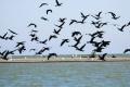 Dunajské luhy sú útočiskom desaťtisícov vtákov