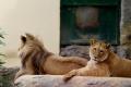 Do behu pre levy v Zoo Bojnice sa zapojilo viac ako 500 ľudí