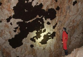 Nezodpovední turisti zlikvidovali 160 kusovú kolóniu netopierov
