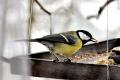 Na jar sa vtáky o seba postarajú už aj sami, prikrmovať veľmi netreba