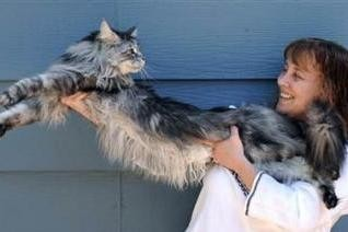 Najdlhšia mačka na svete podľahla rakovine