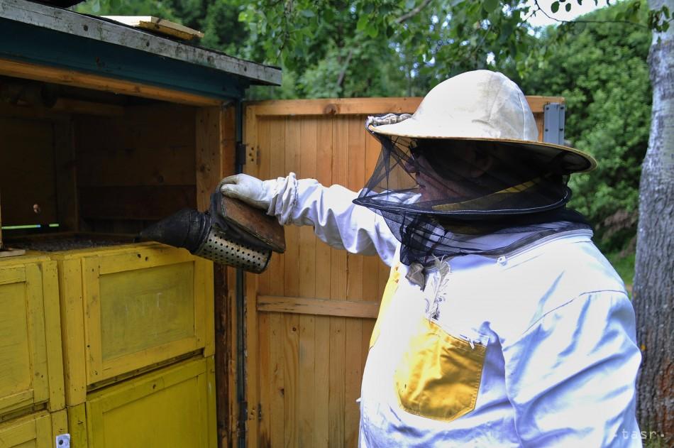 Slovenskí včelári vyprodukovali takmer o polovicu menej medu ako vlani