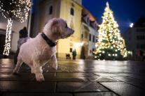 Vianočná prechádzka