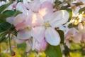 Jar sa na Slovensku začne v stredu 20. marca v noci