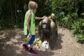 Ľudia chcú trest pre rodičov chlapca, kvôli ktorému utratili gorilu