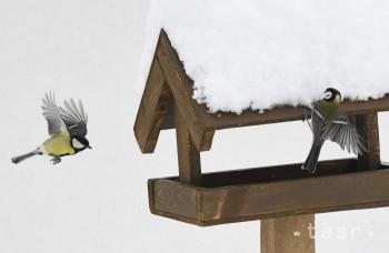 Ktoré vtáky najviac využívajú kŕmidlá?